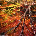 MAINE-AutumnLeaves-3dK