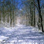 SnowCoveredPath-LandTrust18dK