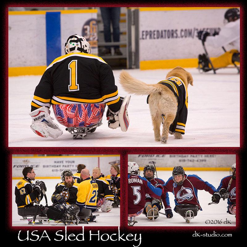 sledhockey112016-comp1